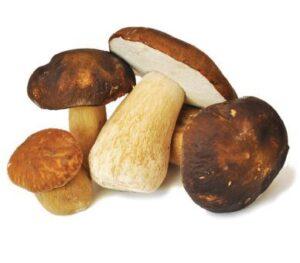 Servizio di ispettorato micologico: controlli gratuiti sui funghi raccolti