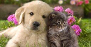 Approvato il nuovo Regolamento per il benessere e la tutela degli animali