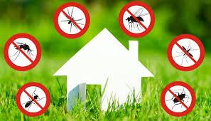 Inizia la fase  2 del piano per la lotta e la prevenzione alle zanzare e ai roditori.